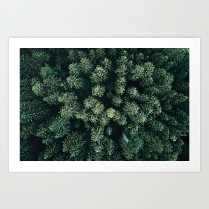 Forest from above landscape photography prints