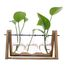 Thumb hot sale plant terrarium with wooden stand glass vase holder for home decoration scindapsus container 3